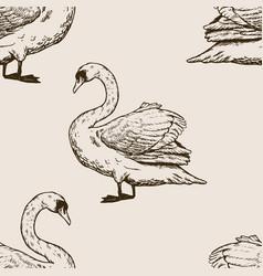 Swan bird engraving vector