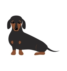 Dachshund dog playing purebred breed brown puppy vector