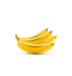 Banana realistic isolated bananas realistic vector