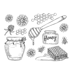 Honey making hand drawn set vector image vector image