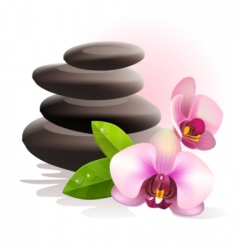 Spa stones and orchid vector