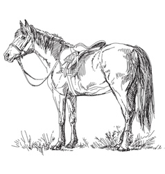 Horse with saddle and bridle vector image vector image