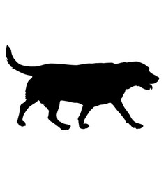 Labrador dog silhouette on a white background vector