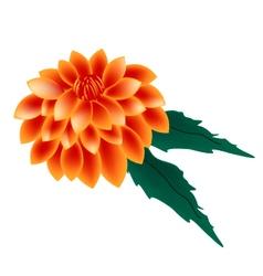 Orange dahlia flower on a white background vector