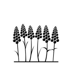 Stylized lavender flower vector