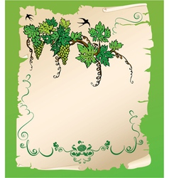 Hand drawn branch of grapes on old paper scroll vector