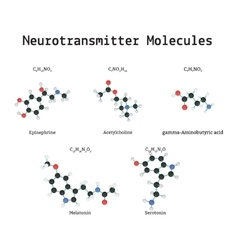 Neurotransmitter molecules set vector image