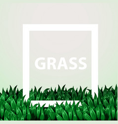 realistic fresh grass with frame eco concept vector image
