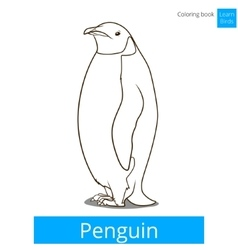 Penguin bird learn birds coloring book vector