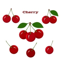 Juicy ripe cherry fruits on a white background vector