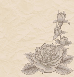 Vintage background beautiful rose in the corner vector
