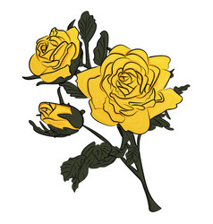 yellow rose on green stem vector image
