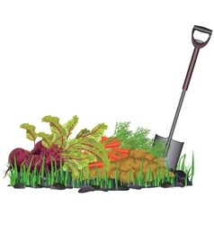 Autumn harvest vegetables on the grass and shovel vector