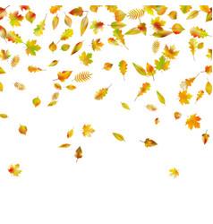 Falling autumn leaves eps 10 vector