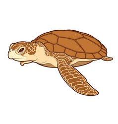 sea turtle color vector image