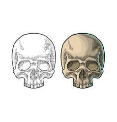 skull human black vintage vector image