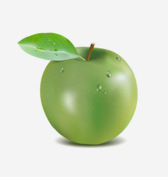 green apple with water drops - gradient mesh vector image vector image