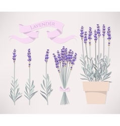 Bouquet of lavender vector