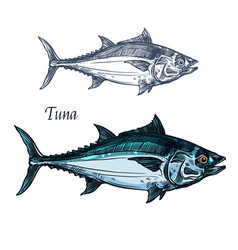 Tuna fish isolated sketch icon vector