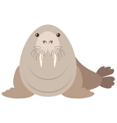 Walrus on white background vector
