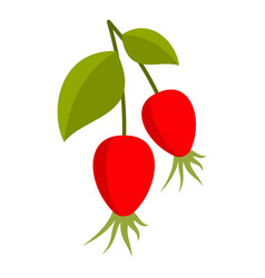 Ripe berries of a dogrose icon isolated vector