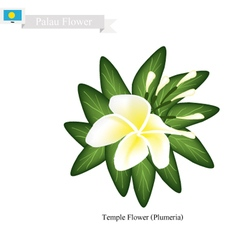 Temple Flower A Popular Flower in Palau vector image vector image