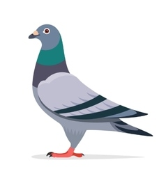 Pigeon character vector image vector image