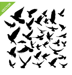 Flying birds silhouette vector