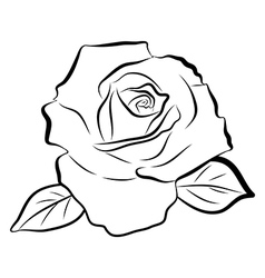 Sketch line drawing of rose vector image vector image