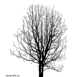 Dead tree without leaves sketched vector