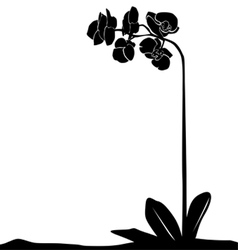 For designers plant - orchid vector