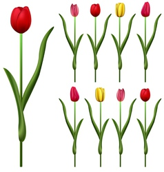 Tulips small vector