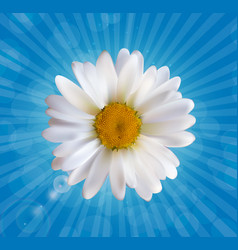 colorful naturalistic beautiful 3d chamomile vector image vector image