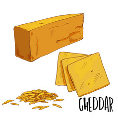 full color cheese hand drawn vector image