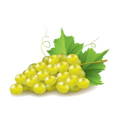 Grapes isolated on white vector image vector image