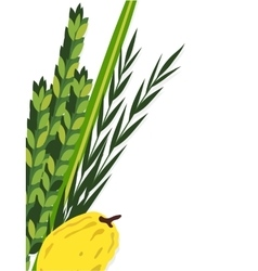 Jewish holiday sukkot lulav etrog arava and vector