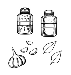 Salt pepper garlic and basil sketch vector