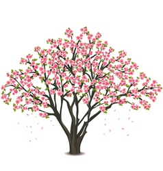 Japanese cherry tree blossom over white vector