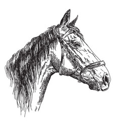 Horse head in profil with bridle hand drawing vector