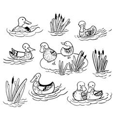 Doodle set with ducks and reed vector image