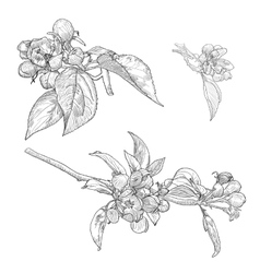 Vintage Collection of Hand Drawn Blooming vector image
