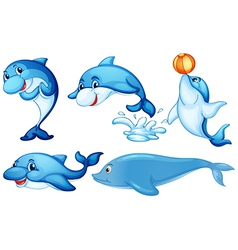 Playful dolphins vector image