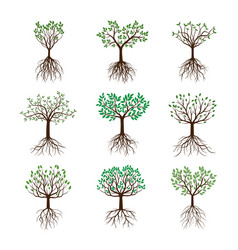 set spring trees with leafs and roots vector image vector image
