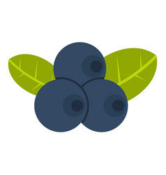 Fresh blueberries with leaves icon isolated vector