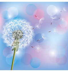 Flower dandelion on light blue pink background vector image