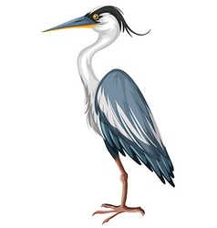 Crane with gray feather vector