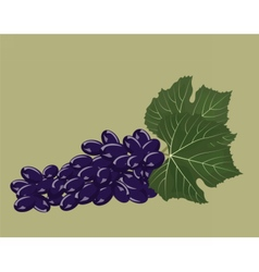 Grapes clustters isolated vector image vector image