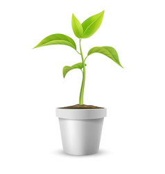 Green sprout in pot vector