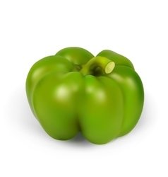 Realistic green pepper vector