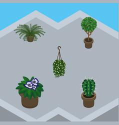 Isometric houseplant set of flowerpot peyote vector